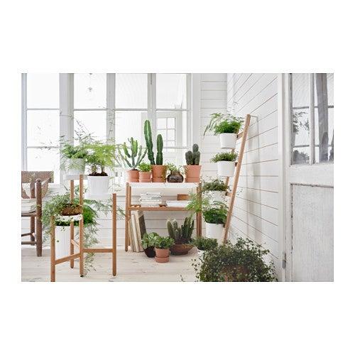 Jardín vertical con una escalera.