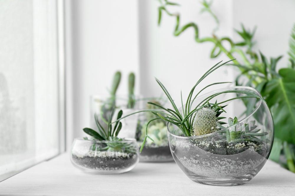 Maceteros de cristal con tierra para cactus.