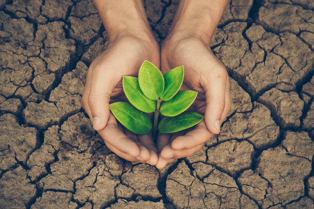 Plantas para climas secos.