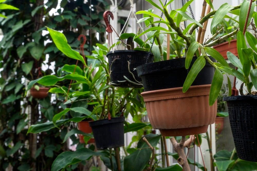 Podar jardines verticales.