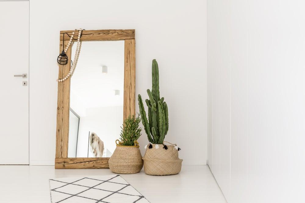 Recibidor con cactus grandes.