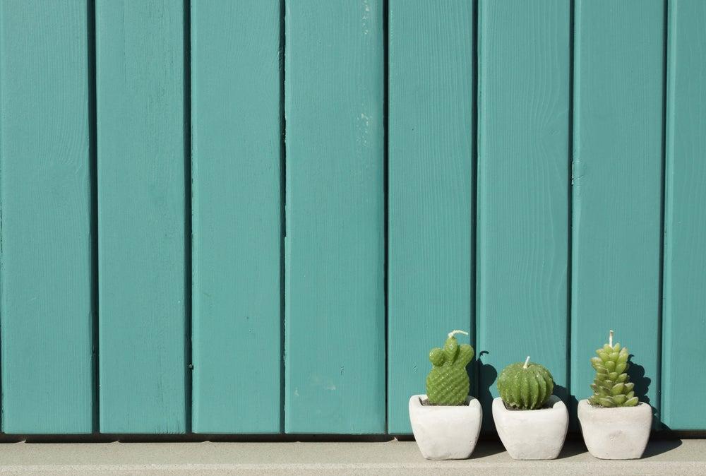 Velas con forma de cactus.
