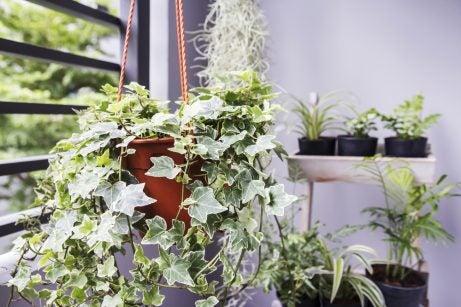Ideas para decorar tu casa con hiedra: cuidado y decoración