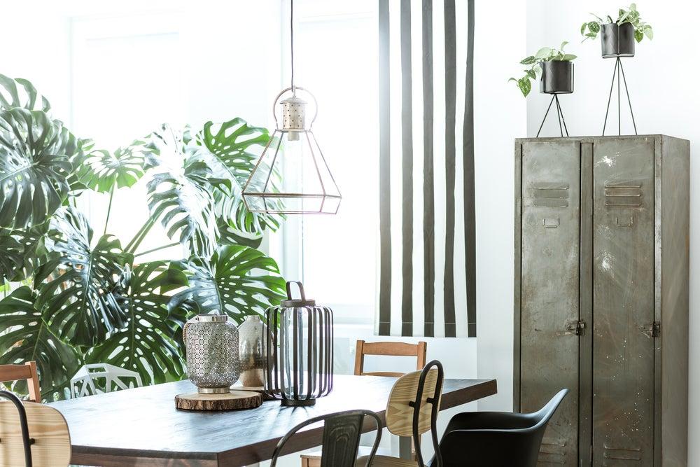 Plantas decorativas de interior.