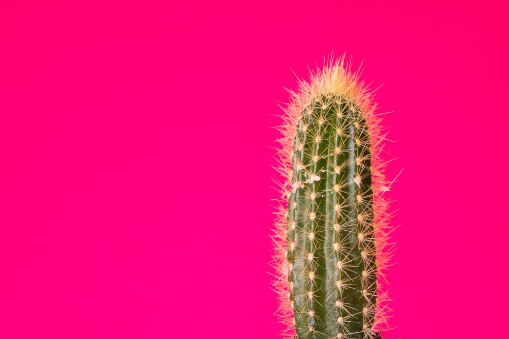 Conoce las diferentes clases de cactus