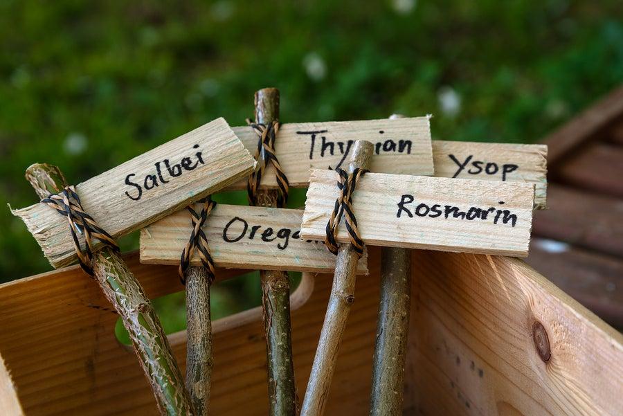 Siembra tus especias de manera original en recipientes bien identificados o en jardines verticales.