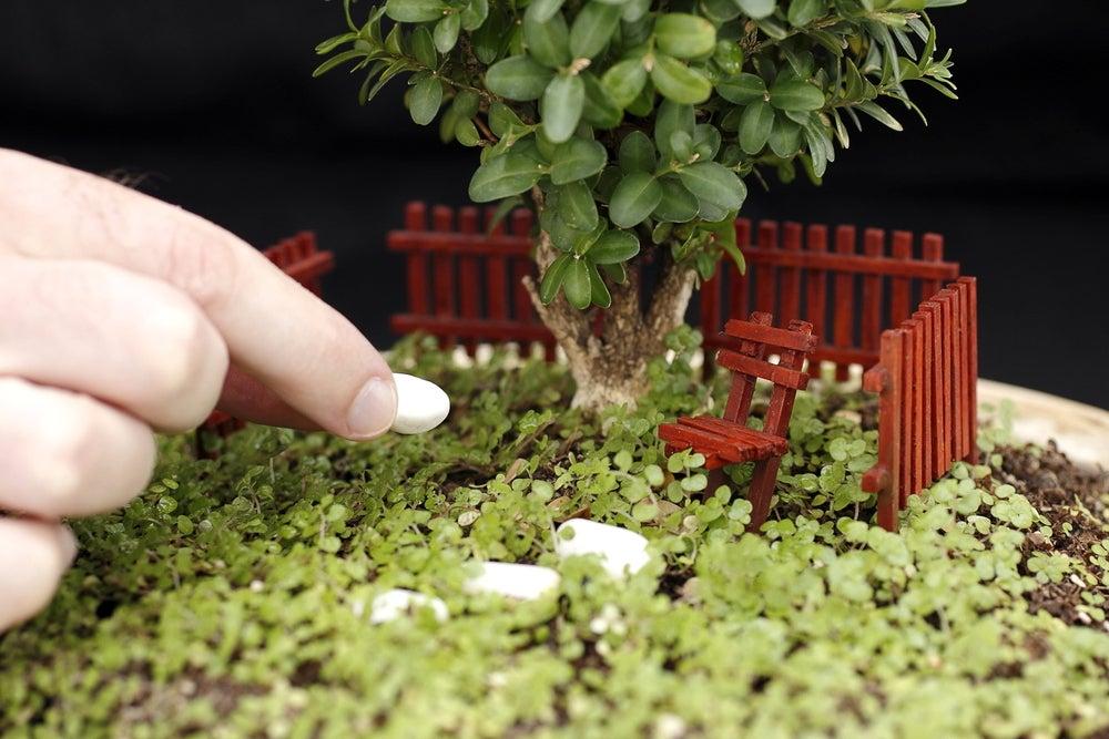 Arbusto para mini jardín.