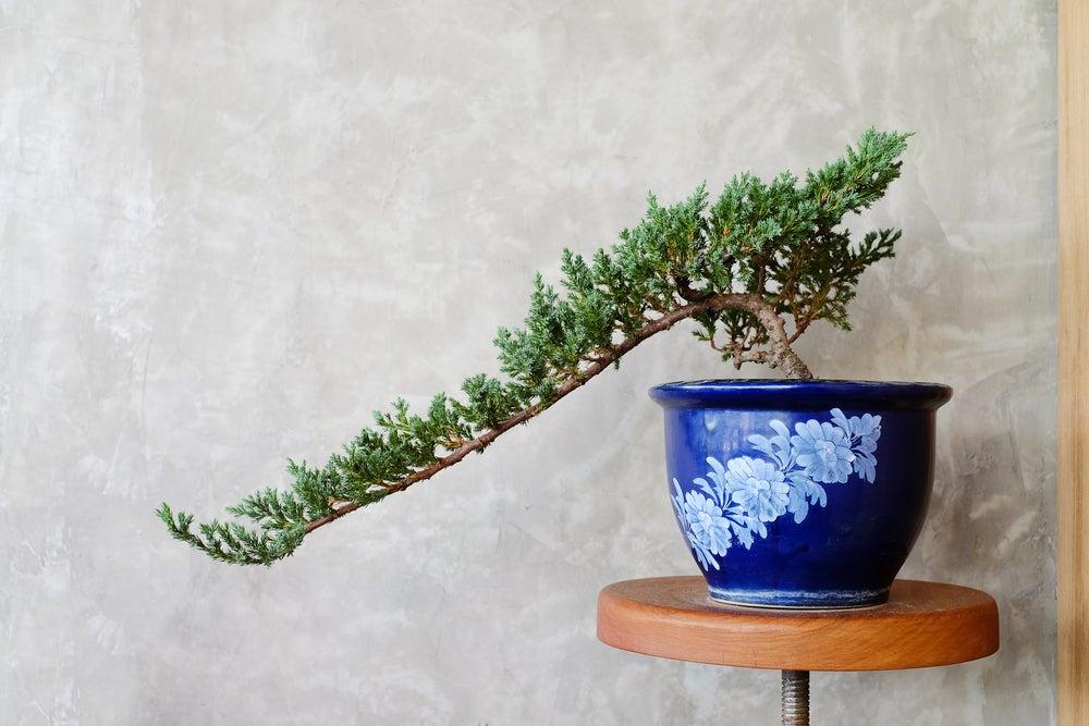 Decora el jardín con bonsáis
