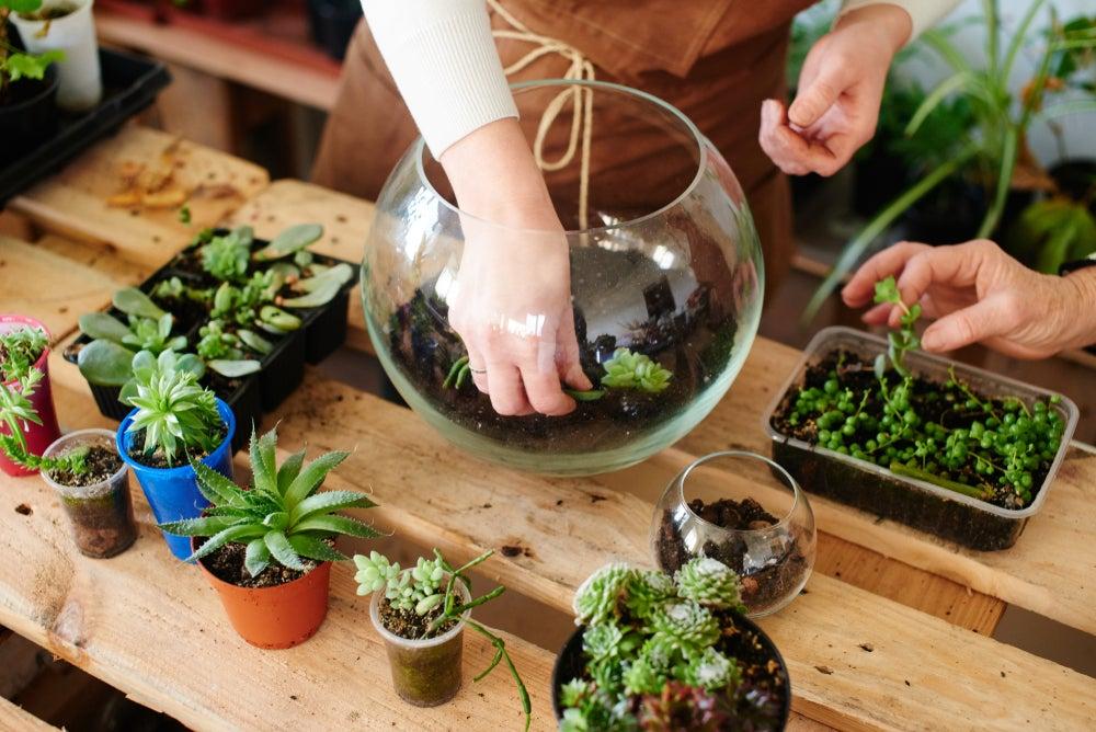 Crear mini jardín.