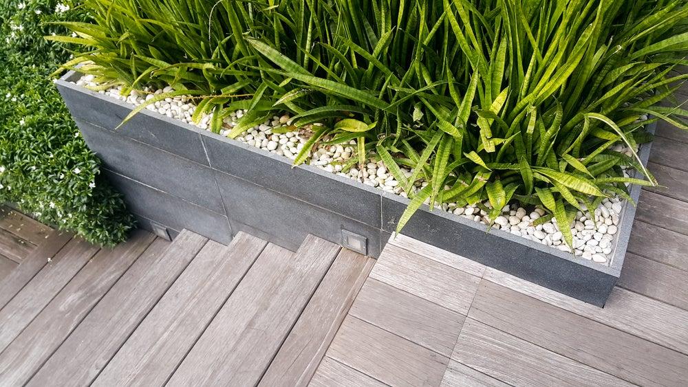 Plantas decorativas para las escaleras del hogar