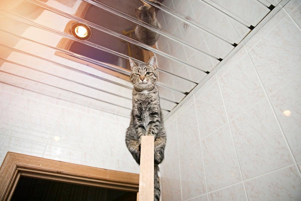 3 pautas para poner espejos en el techo
