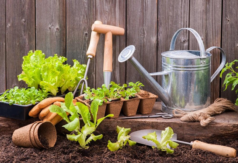 Huerto en tu jardín.