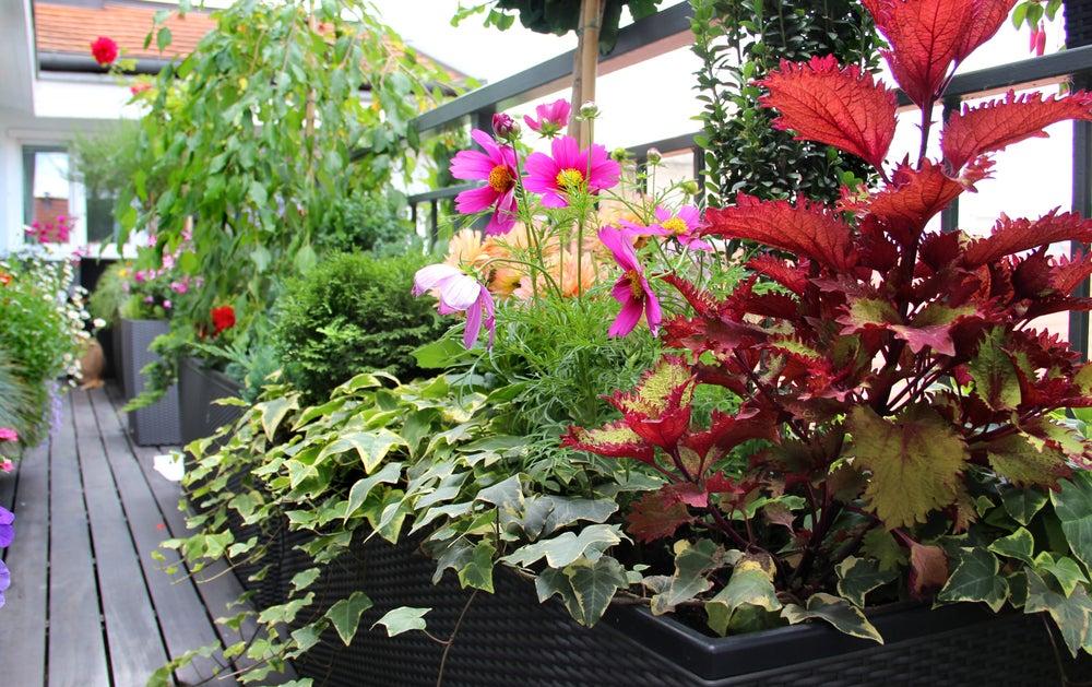Plantas para la terraza.