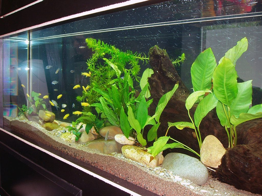 Some aquariums are better for growing natural plants than others.