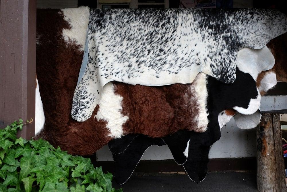 Alfombras de piel de vaca.