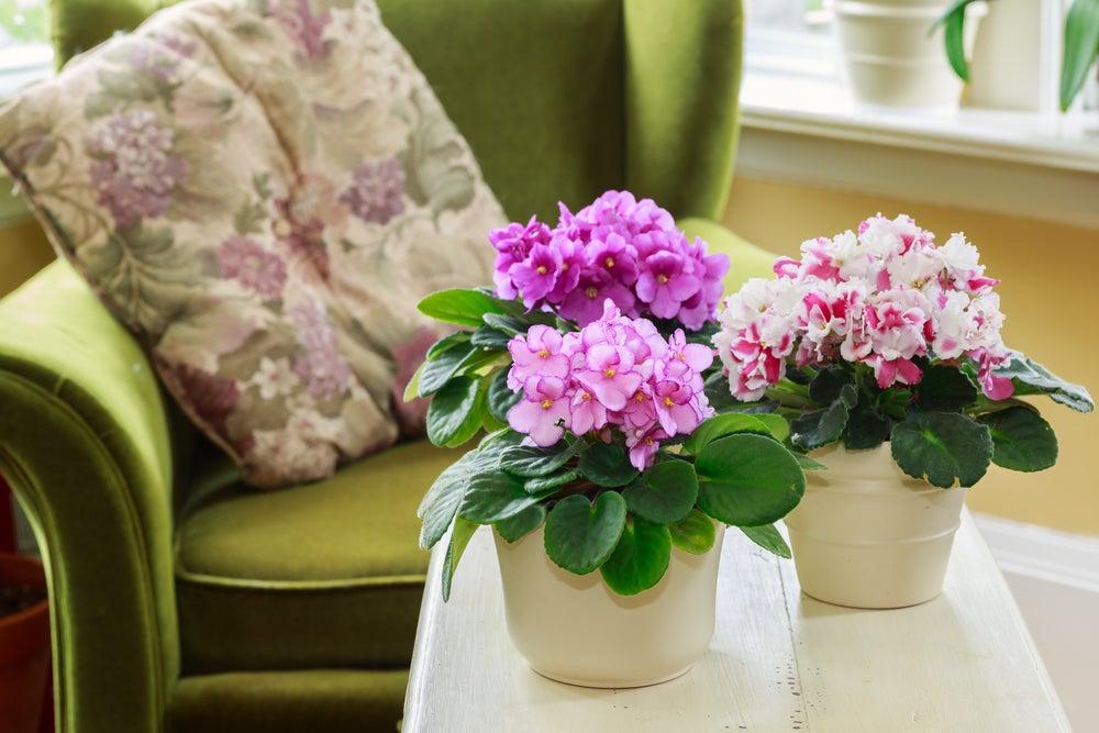 3 plantas ideales para darle color al otoño