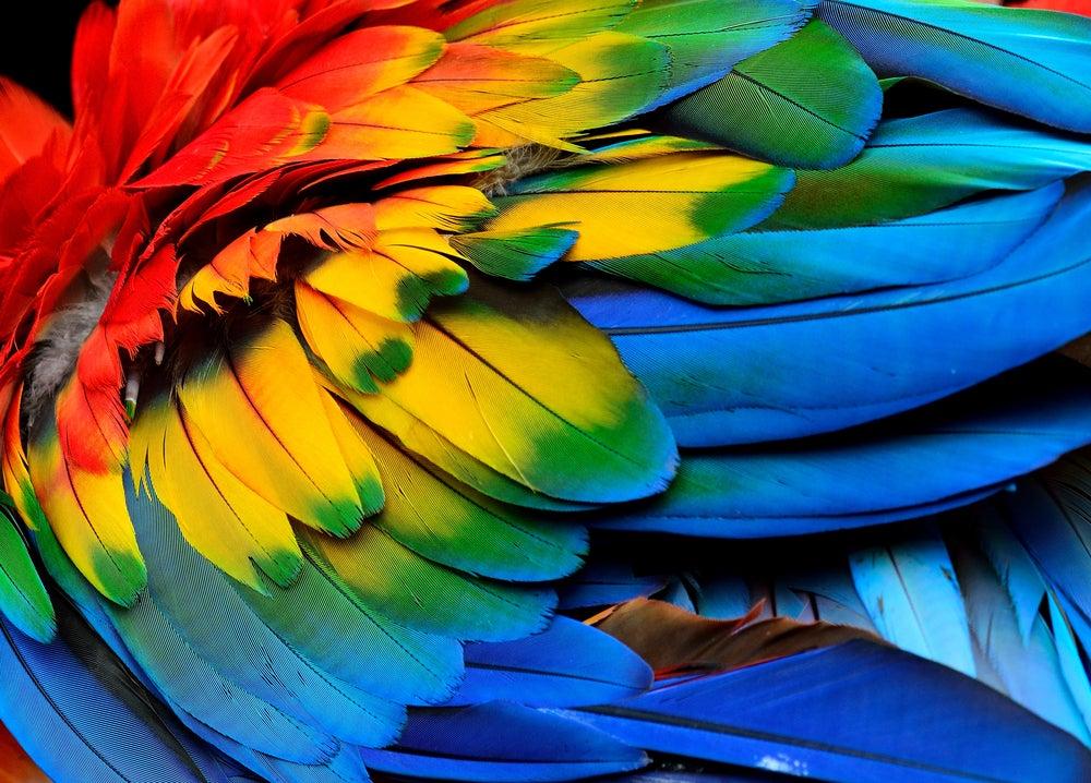 5 ideas de manualidades decorativas con plumas