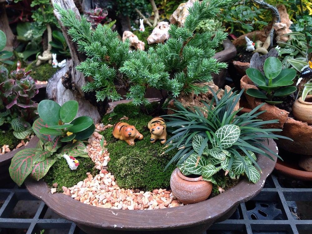 Jardín en miniatura.