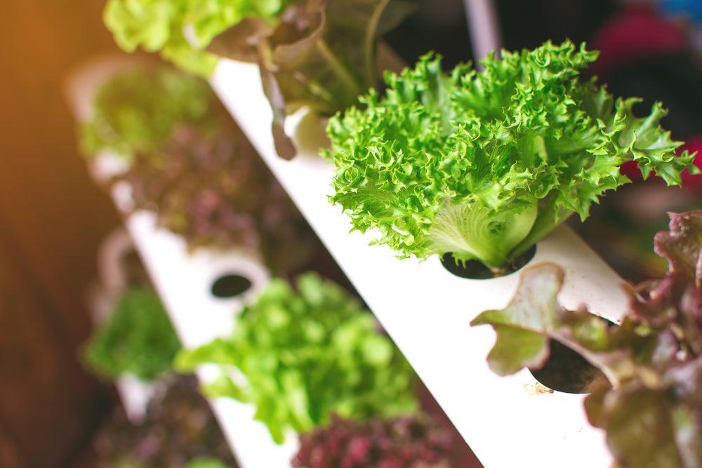 Beneficios del jardín hidropónico.