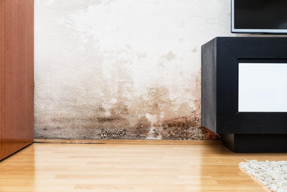 Problemas de humedad en paredes: cómo solucionarlo