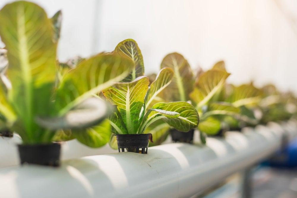 Ideas para construir un jardín hidropónico