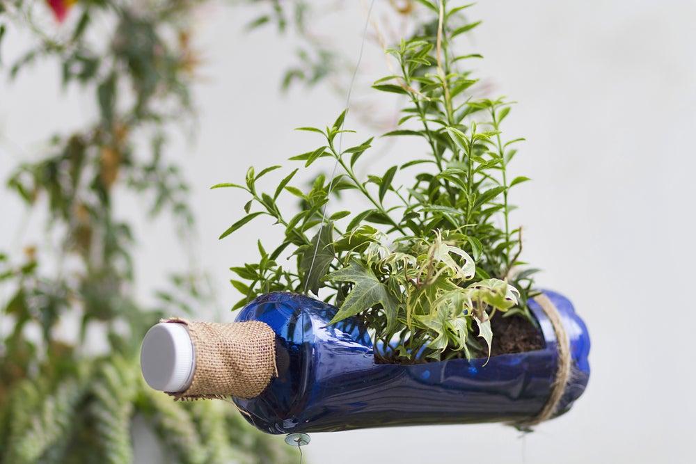 Jardín vertical con botella de plástico.
