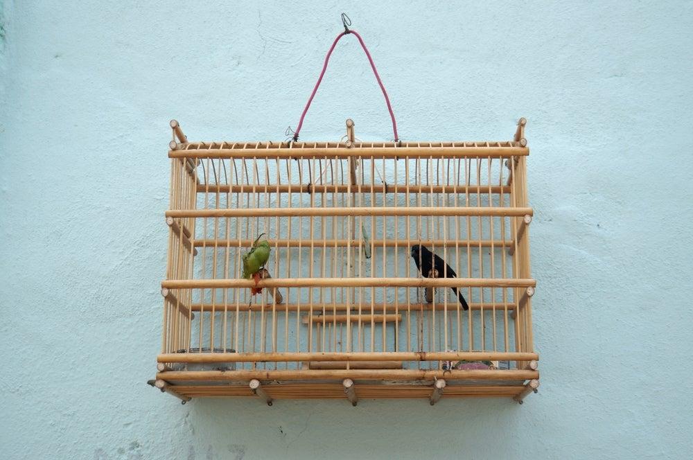 Jaula para pájaros de madera.