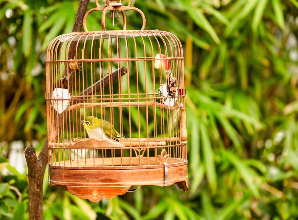 Jaula redondeada para pájaro.