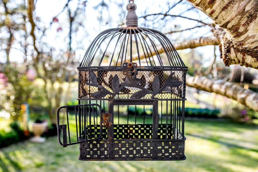Tipos de jaulas para los pájaros