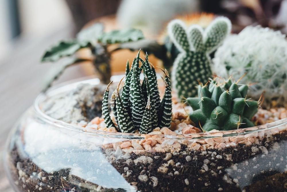 Plantas para terrario.