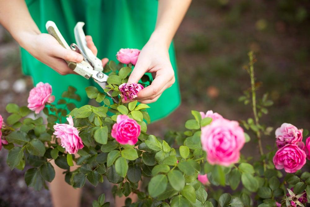Aprende a podar tu jardín siguiendo estos pasos