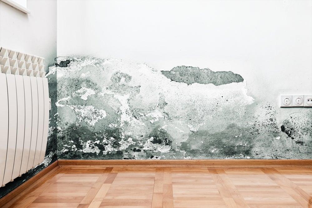Conoce los tipos de humedad en las paredes