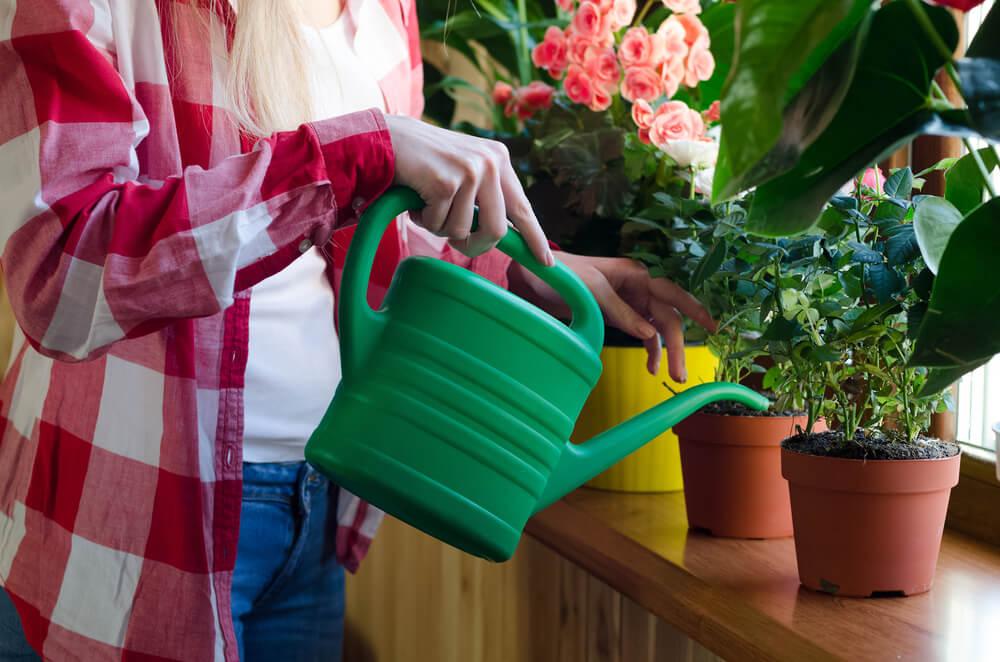 Regar las plantas para mantener su humedad.