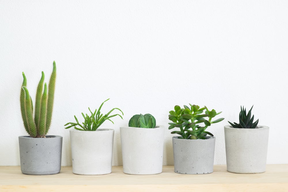 3 plantas de interior que no pueden faltar en tu hogar