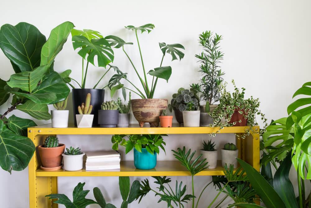Temperatura del ambiente para las plantas.