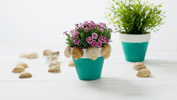 Macetas de plantas decoradas con conchas.