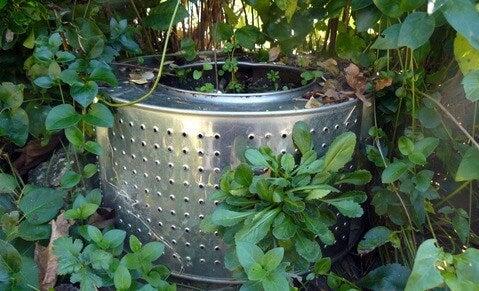 Plantador de um tambor de máquina de lavar.