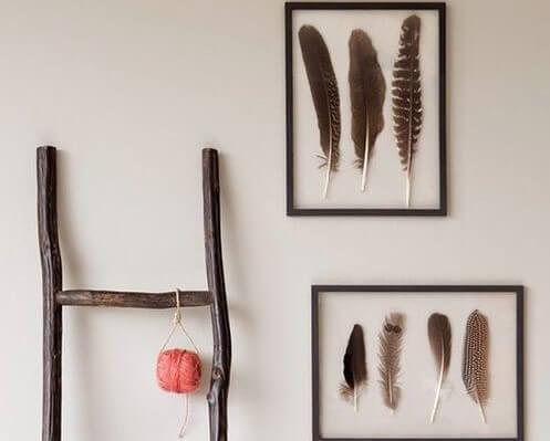 Marcos con plumas enmarcadas.