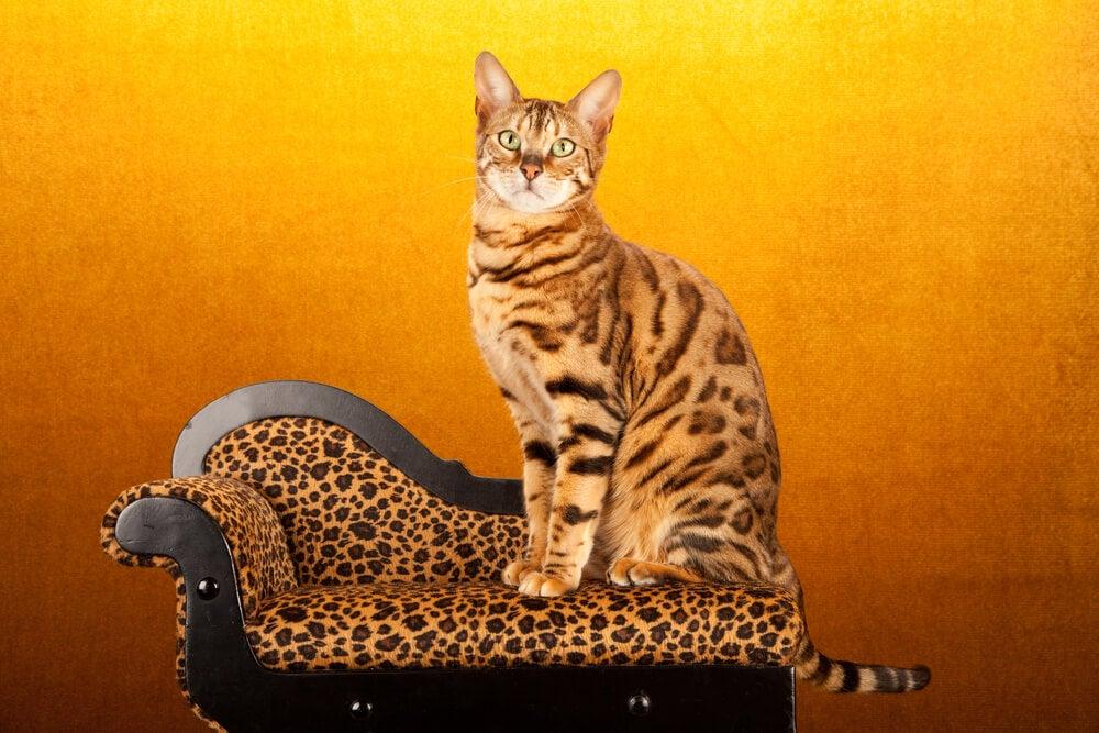 Butaca de leopardo.