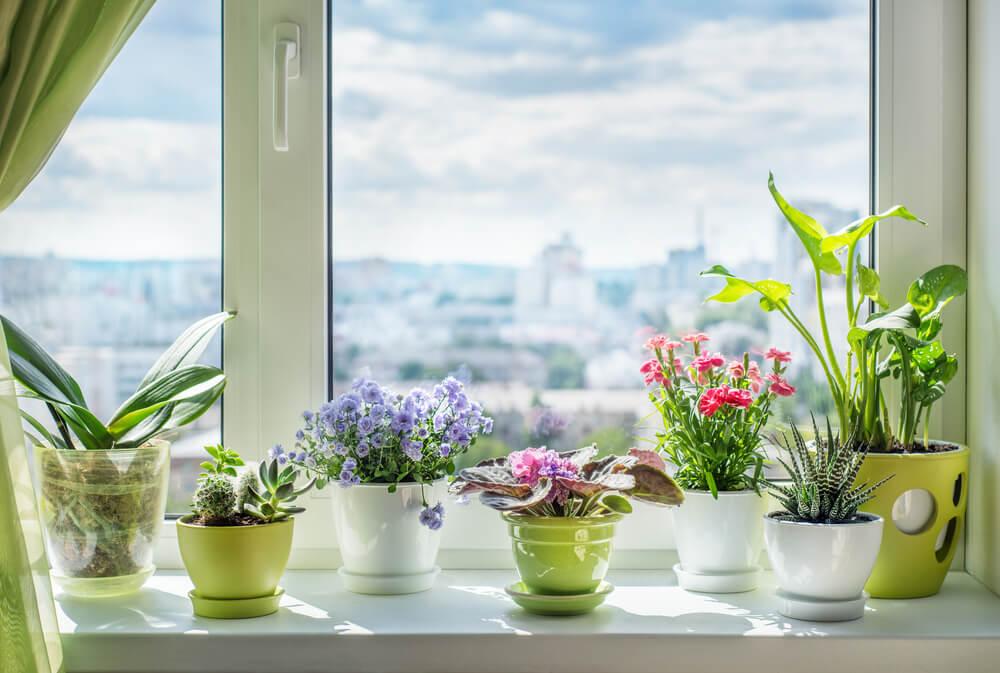 Maceteros en la ventana
