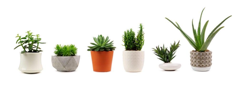 Plantas que eliminan toxinas y purifican el aire