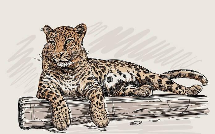 Vinilo de leopardo.