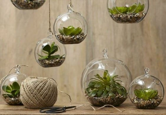 Macetas en esferas transparentes.