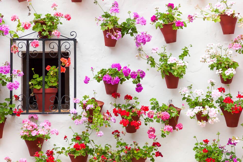 Plantas de un patio andaluz.