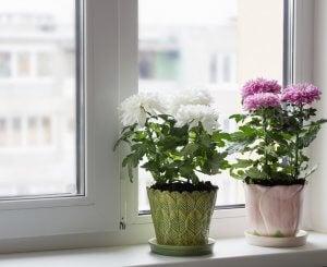 Alfeizar con plantas.