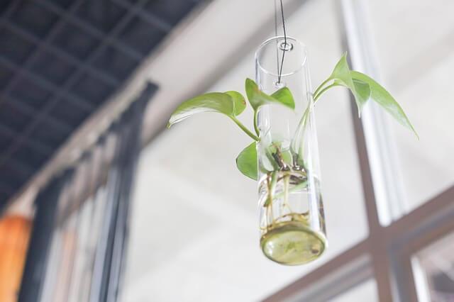 Decorar con plantas el salón. Planta colgada con jarrón de cristal y agua