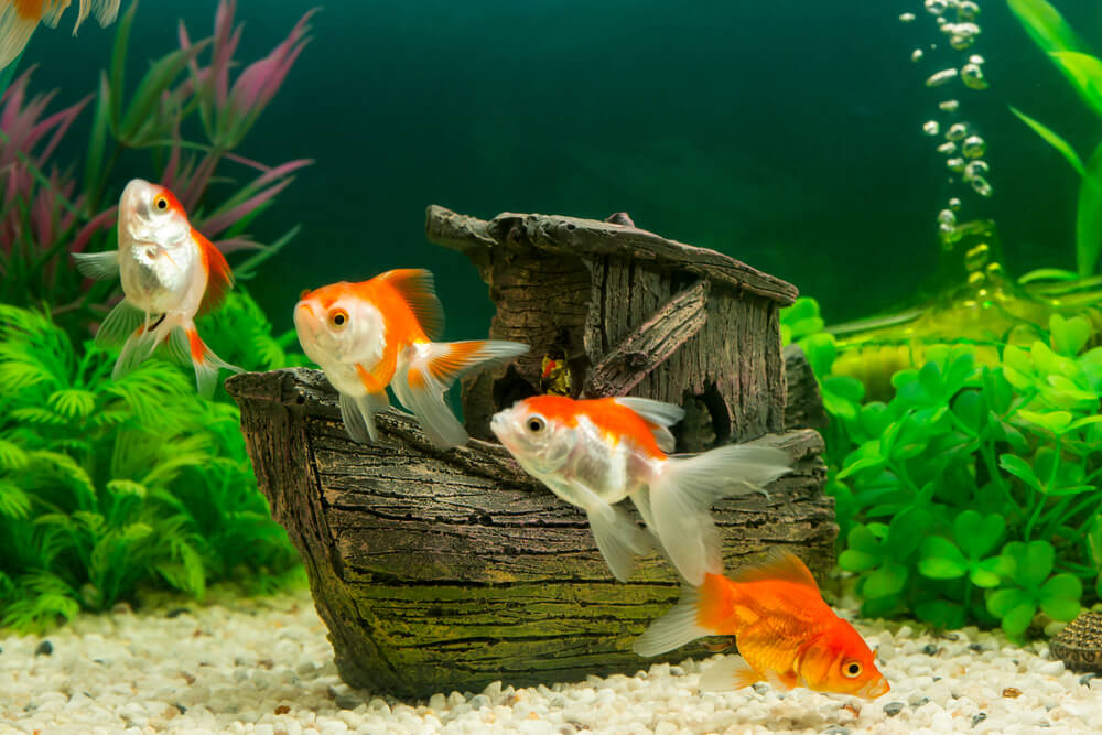 Fondo de acuario.
