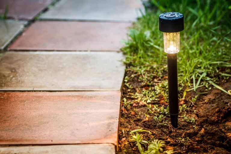 Un jardín bien iluminado