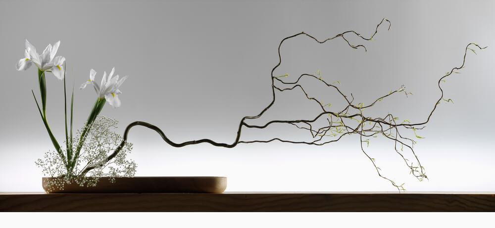 Mantener flores ikebana.