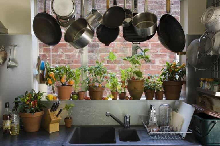 Las mejores plantas para poner en la cocina